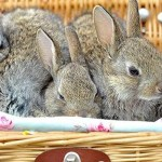 AW Blog Chain, April 2012: How to Kill Off Unnecessary Plot Bunnies